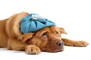 emergencydog